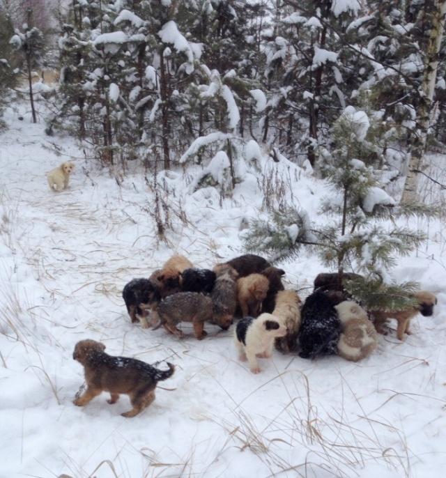Неожиданная находка в лесу (4 фото)