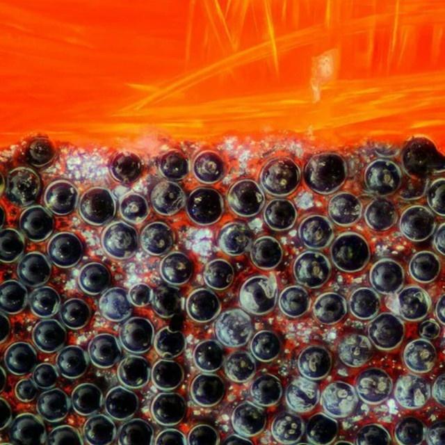 Интересные и необычные вещи под микроскопом (30 фото)