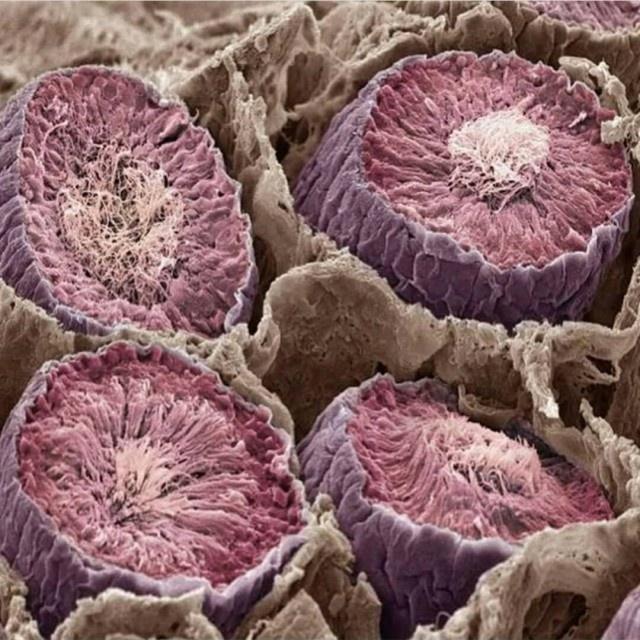 mikroskop altında İlginç ve sıradışı şeyler (30 fotoğraf)