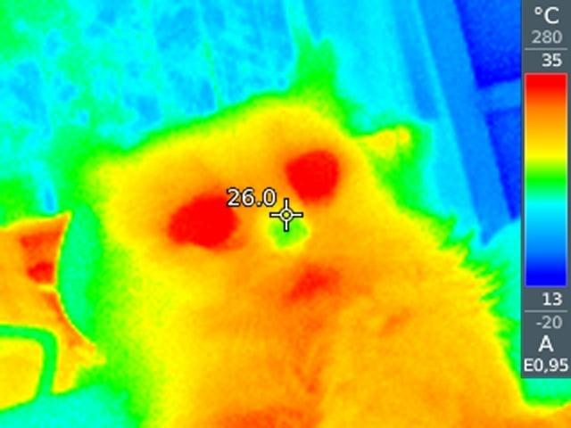 Привычные нам всем вещи и тепловизор (10 фото)
