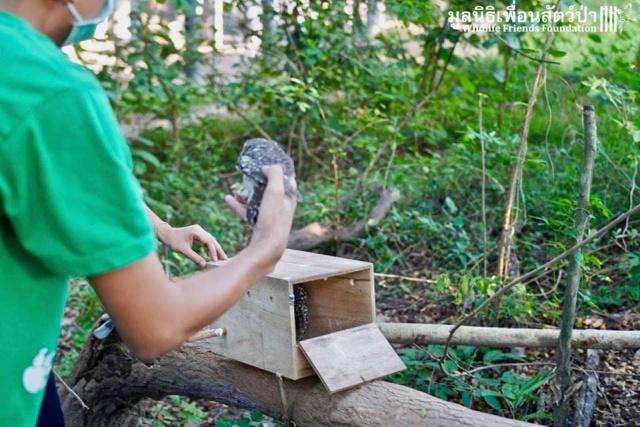 Фермер из Таиланда обнаружил двух маленьких сов, которым требовалась помощь (14 фото)