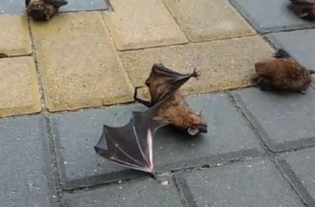 В Ростове на тротуаре обнаружили десятки летучих мышей (3 фото + 2 видео)
