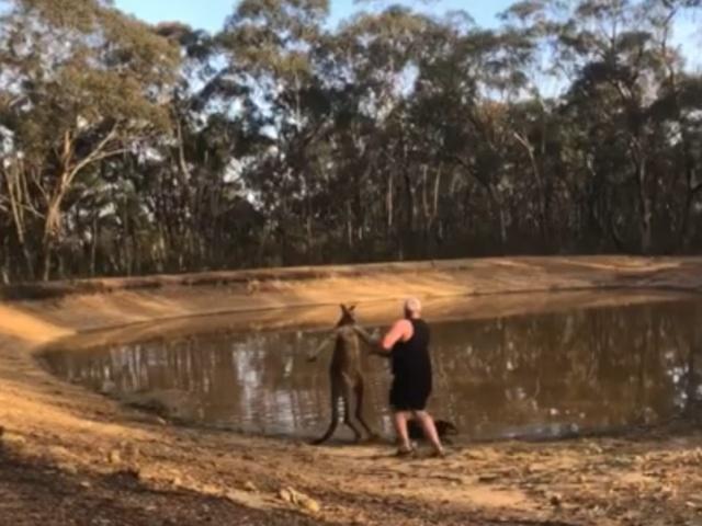 Неравный бой: мужчина против кенгуру
