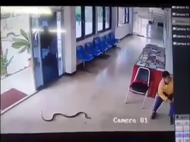 Змея напала на мужчину в зале ожидания тайского автовокзала