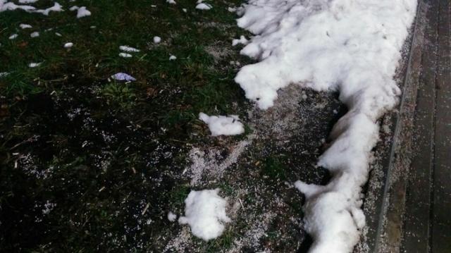 Дорогостоящий газон решили посыпать солью (3 фото)