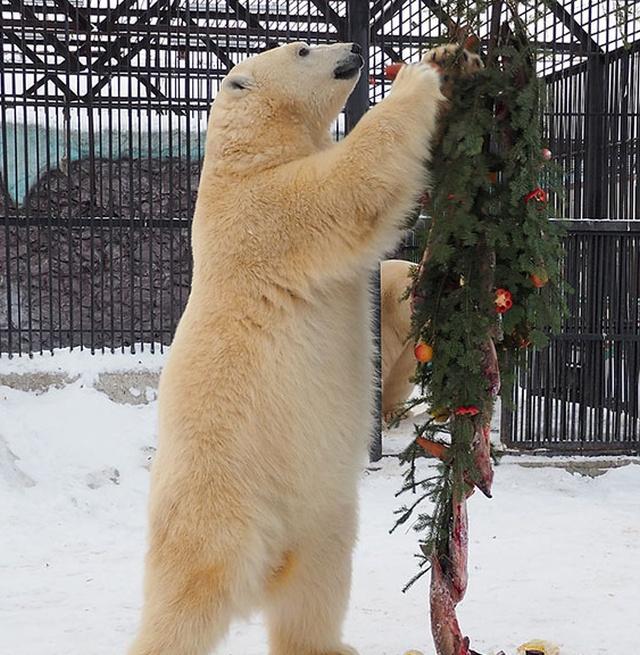 Новогоднее настроение в красноярском зоопарке (5 фото)