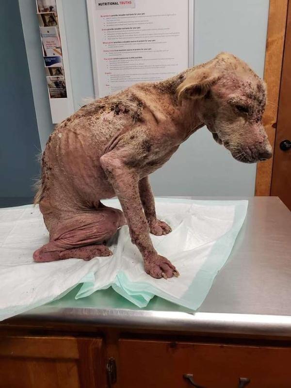 Жители Техаса спасли бездомного пса, но не думали, что он выживет (6 фото)