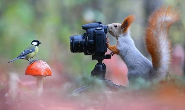 Яркие фотографии вместо тысячи слов (49 фото)