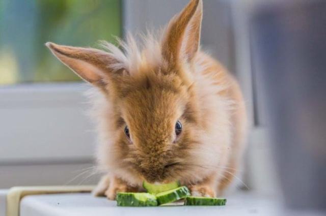 Что будет, если кормить грызуна только травой (3 фото)