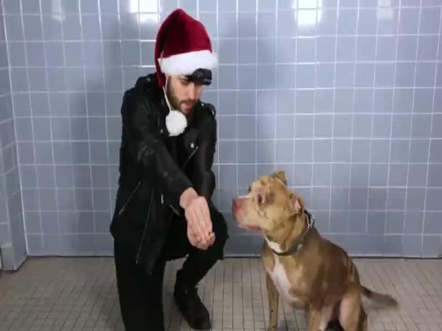 Фокусник Джон Стессел решил удивить собак в приюте