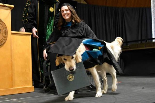 В CША золотистый ретривер вместе со своей хозяйкой получил степень магистра (4 фото)