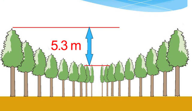 """""""Экспериментальное лесоводство"""" или необычный японский эксперимент (9 фото)"""
