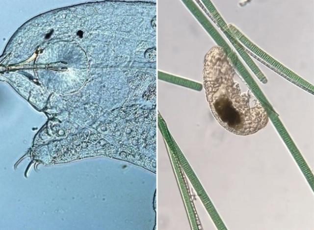 Видео через микроскоп, снятые микробиологом Хантером Хайнсом (13 фото)