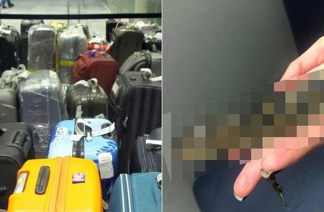 Таможня во Внуково задержала российского туриста с необычным грузом, привезенным из Мексики (6 фото + видео)