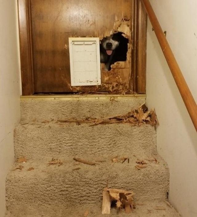 Фейлы и неприятности, от которых никто не застрахован (24 фото)