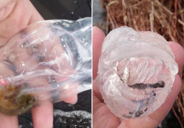 Жительница Филиппин нашла на берегу странное существо (5 фото)