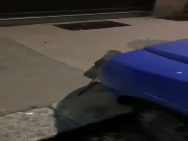 Таких крыс вы еще точно никогда не видели