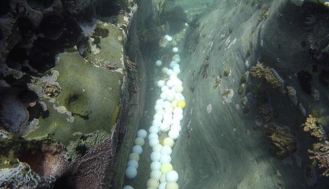 Фридайверы достали из океана несколько тонн мячиков для гольфа (5 фото)