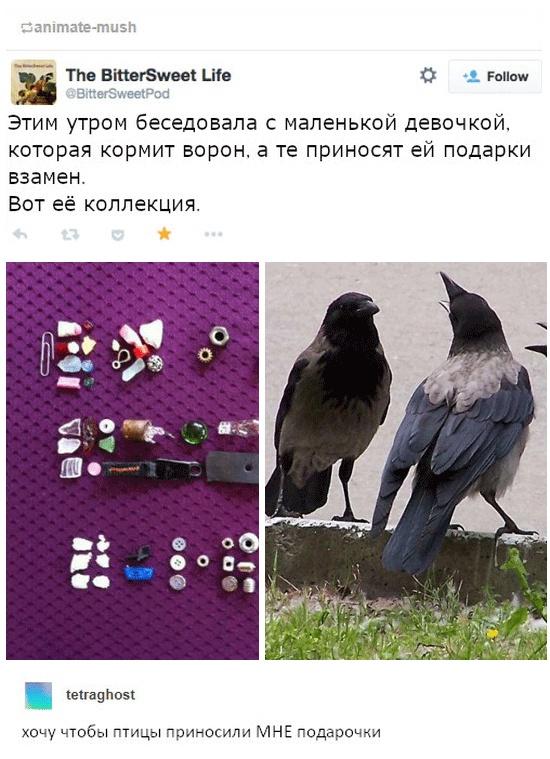 Вороны, такие вороны... (3 скриншота)