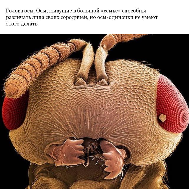 Снимки различных предметов под микроскопом, которые редко можно увидеть так близко (24 фото)