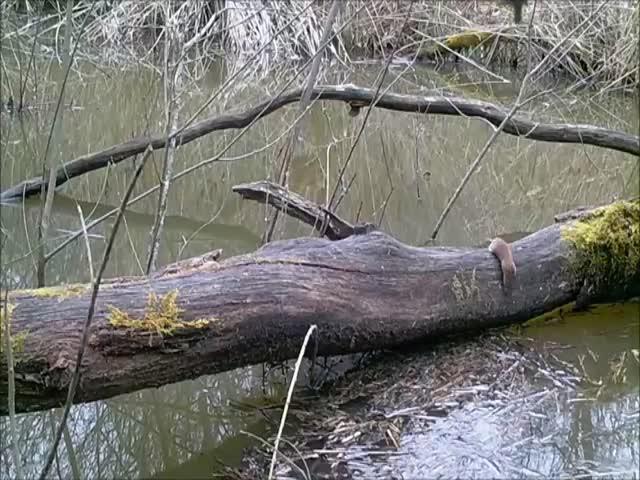 Разнообразие жизни у одного упавшего дерева в лесу
