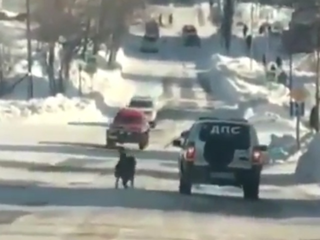 Как полицейские тренировали собаку на скорость бега...