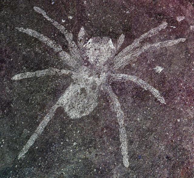 Ученые обнаружили пауков возрастом 110 млн лет со светящимися глазами (2 фото)
