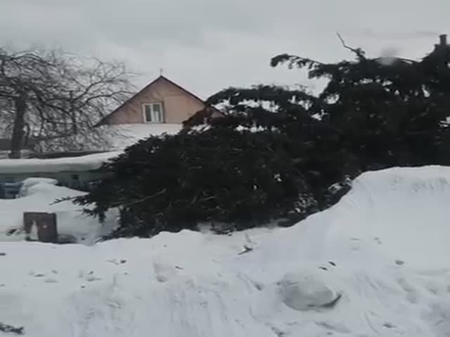 Чиновники вернули ёлку владельцу, которую перед Новым годом спилили без спроса на его участке