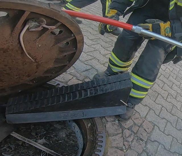 Бригада из восьми немецких пожарных спасла застрявшую крысу (4 фото + видео)