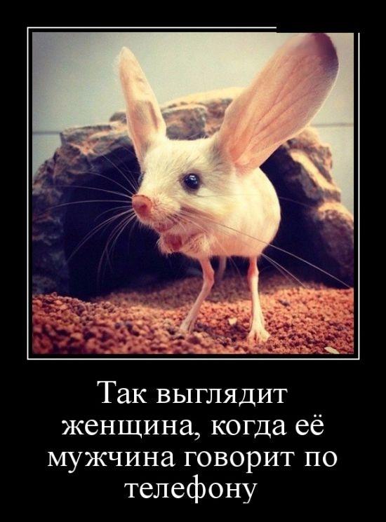 demotivatory_15.jpg