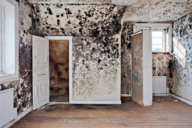 Заброшенные дома и квартиры, выставленные на продажу (36 фото)