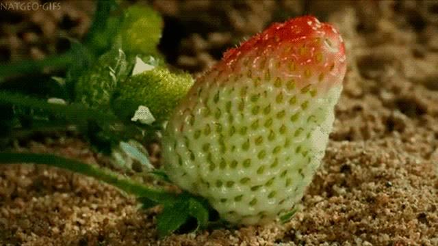 Завораживающий процесс роста растений (17 гифок)