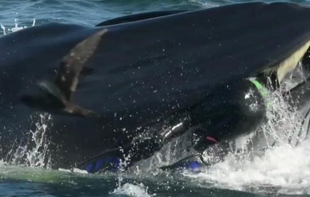 "В ЮАР кит чуть не ""проглотил"" дайвера (6 фото)"