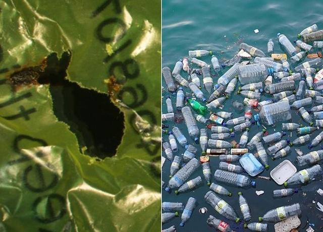 Ученые обнаружили червей, которые могут поедать и переваривать пластик (5 фото)