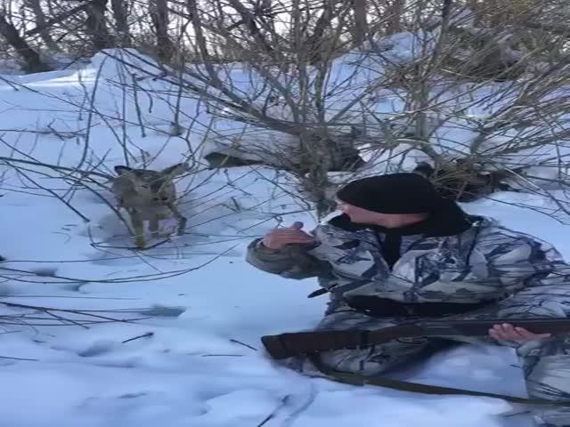 """Неожиданная """"встреча"""" во время охоты на зайца"""