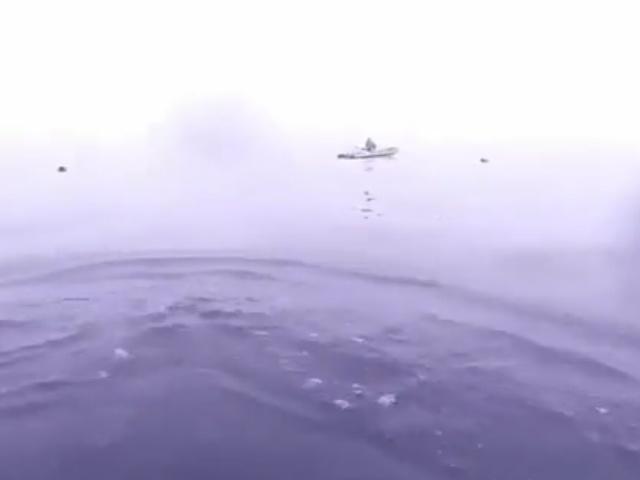 Совсем не то, что хотелось бы увидеть во время подводной охоты