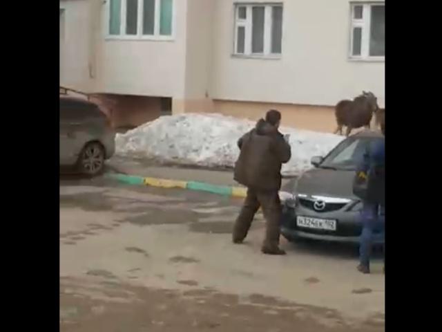 Жительница Башкирии решила отпугнуть лося, швырнув в него своего кота