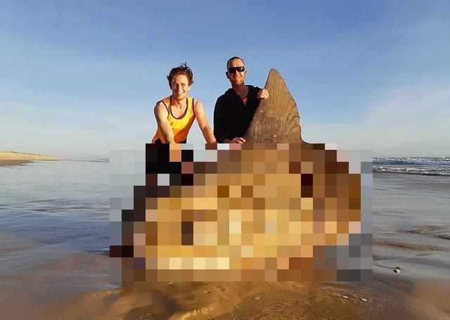 Рыбаки из Австралии обнаружили на мелководье крайне редкую рыбу-солнце (3 фото)