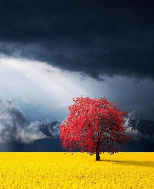 Красочные снимки вместо тысячи слов (45 фото)