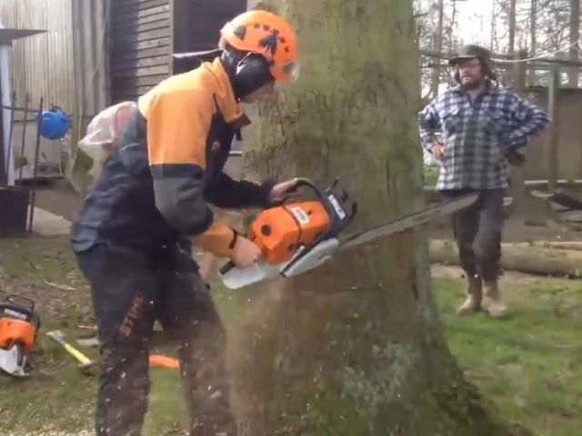 Настоящие мастера валки деревьев