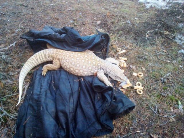 "Неожиданная ""находка"" в Кингисеппском районе Ленобласти (2 фото)"