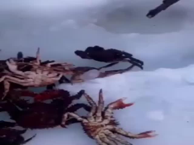 Добыча краба в Охотском море зимой