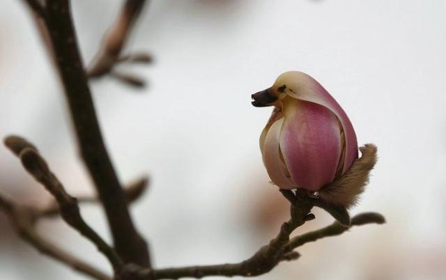 Похоже на птицу? (3 фото)