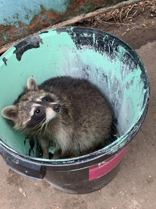 """Необычная """"находка"""" в мусорном контейнере в Москве (2 фото)"""