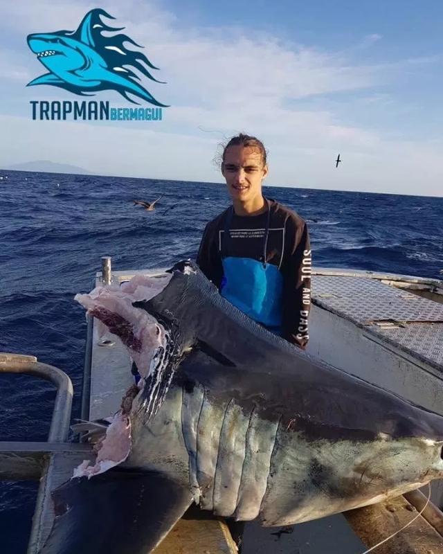 Останки огромной акулы удивили австралийского рыбака (3 фото)