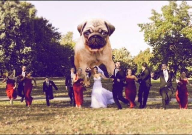 Свадебные фото не должны быть скучными (17 фото)