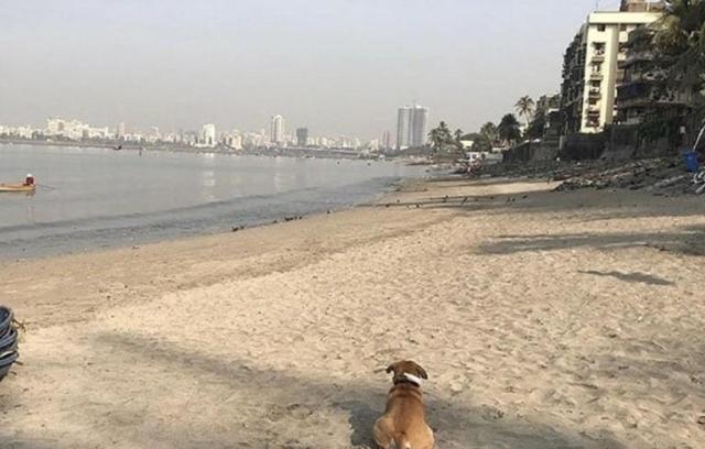 Добровольцы показали, как теперь выглядит пляж Махим Бич в Мумбае (2 фото)