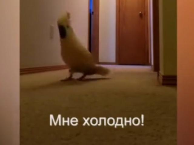 Наташа, закрой окно!