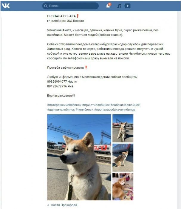 Проводники потеряли собаку Анастасии Бугаенко при использовании новой услуги РЖД (4 фото)