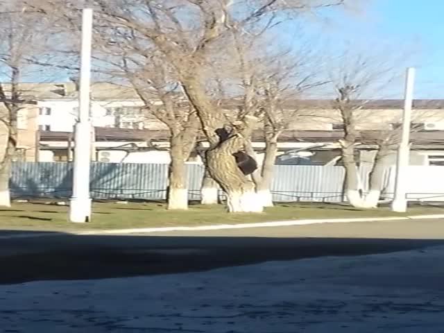Очевидцы сняли на камеру медведя в оренбургском Гае